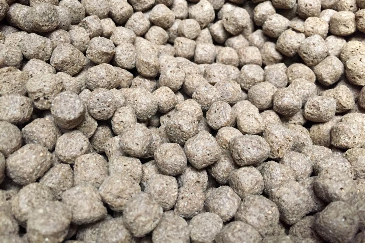 dog food rs