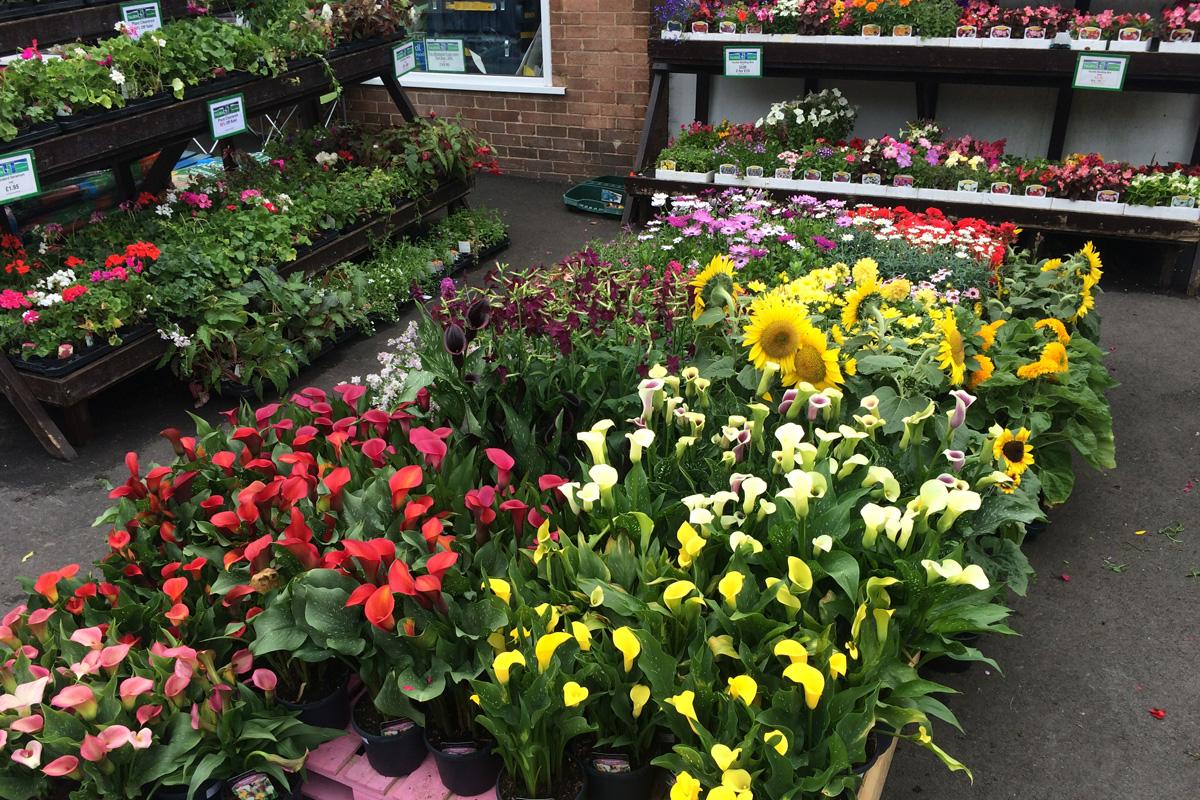 plant display rs